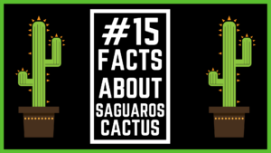 15 Little Known Facts About Saguaro Cactus