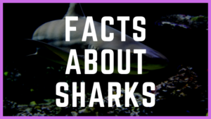 25 Fishy Facts About Sharks You Have To Know